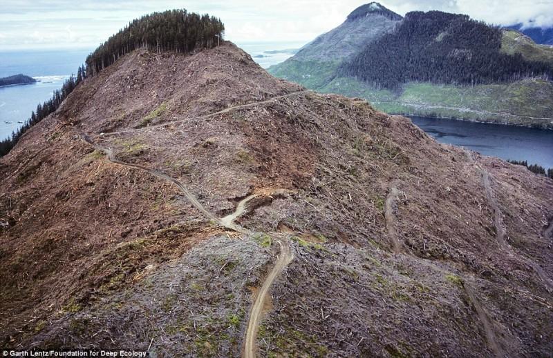 Come in Amazzonia: la deforestazione selvaggia si ripete (nella foto una foresta canadese)