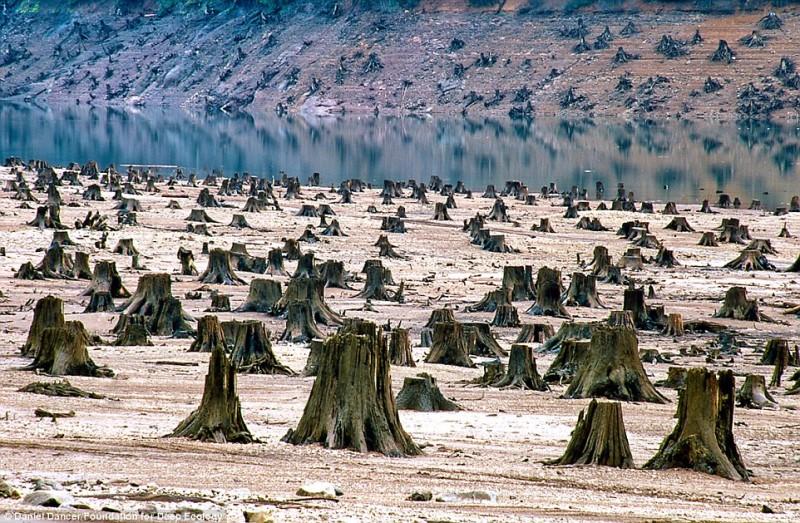 Oregon, questa millenaria foresta distrutta per far posto ad una nuova diga