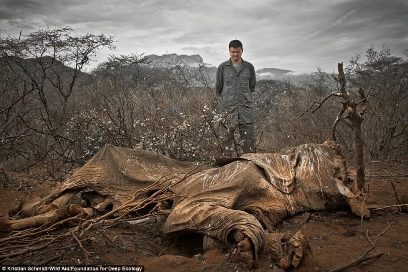 Un elefante ucciso dai bracconieri e lasciato a marcire