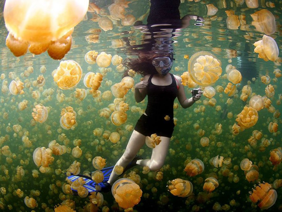 Yellow Jellies - Jellyfish Lake, Eil Malk, Palau