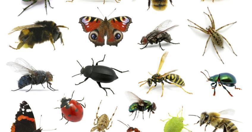 Copia dagli insetti!